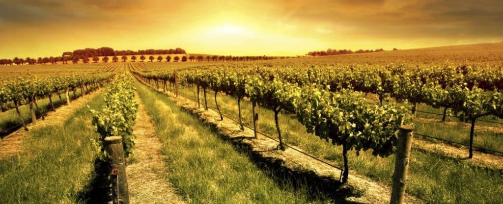 winery livermore, CA
